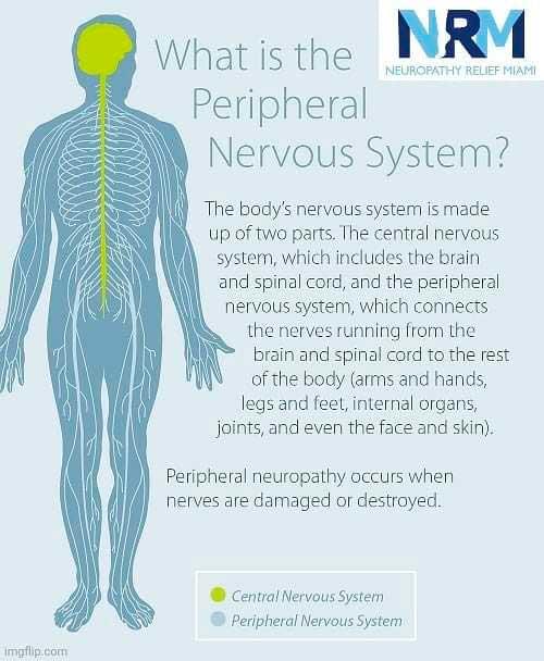Neuropatía sensorial - ¿Qué es el sistema nervioso periférico?